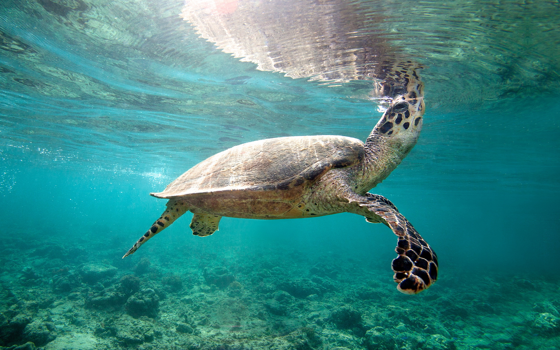 7031747-sea-turtle-underwater.jpg