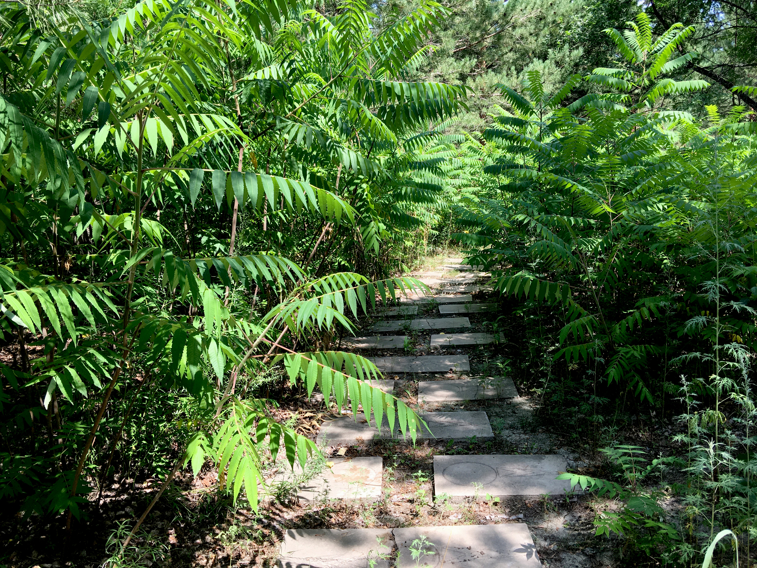 A different path through the park overgrown with ferns.