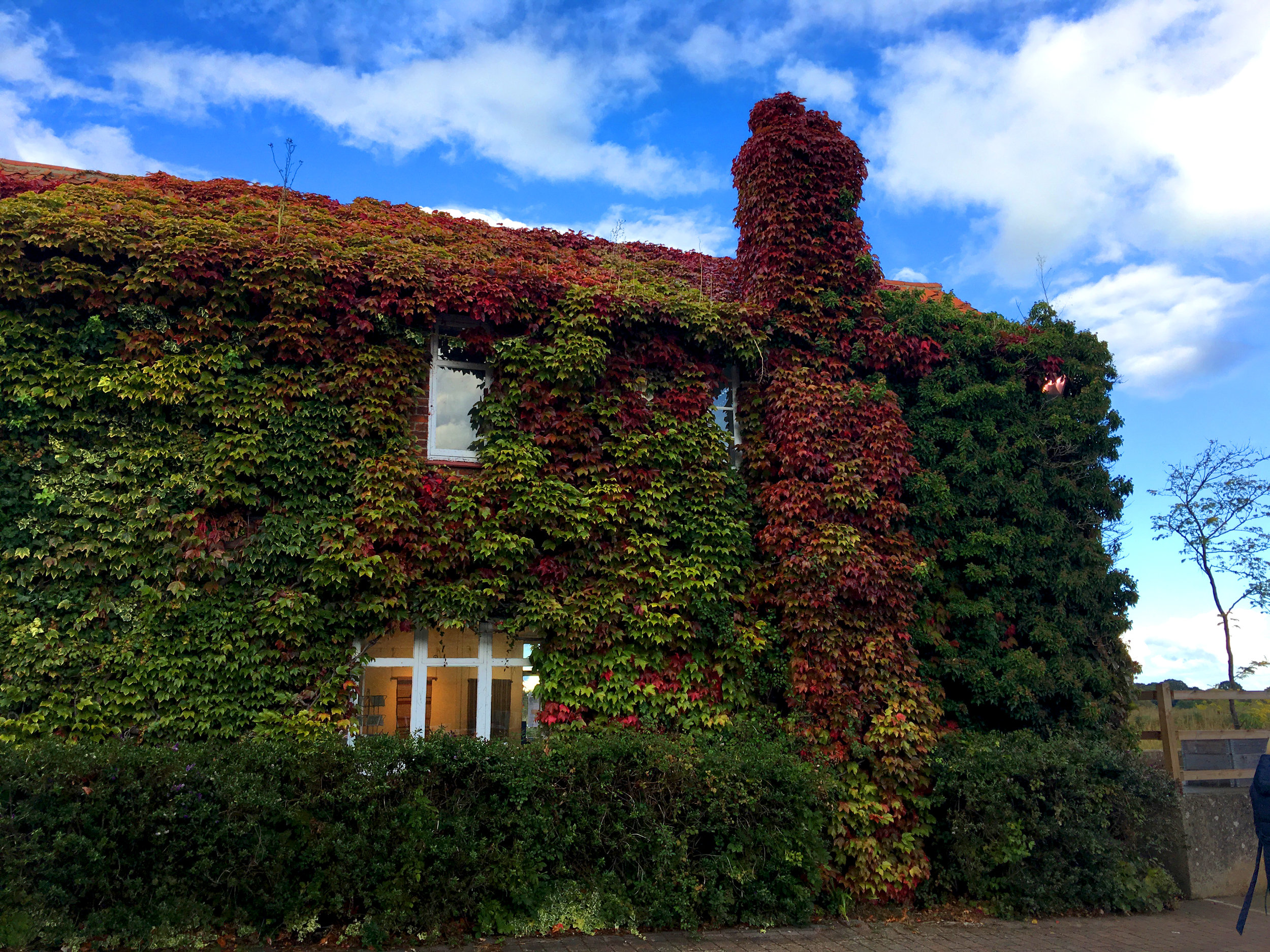 The beautiful ivy-covered buildings at Snape Maltings.