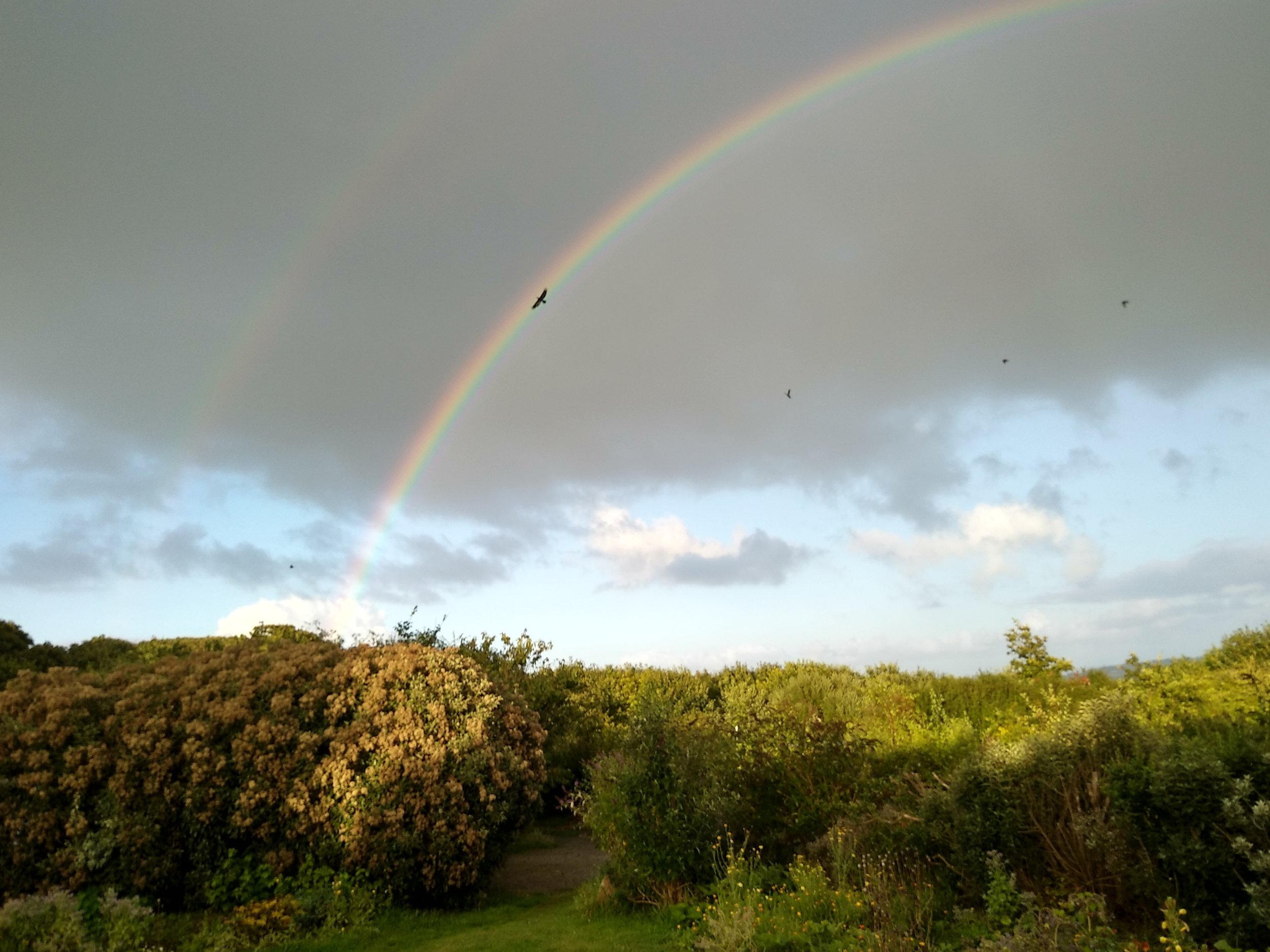 A crow flying through a double rainbow? What does it mean??!