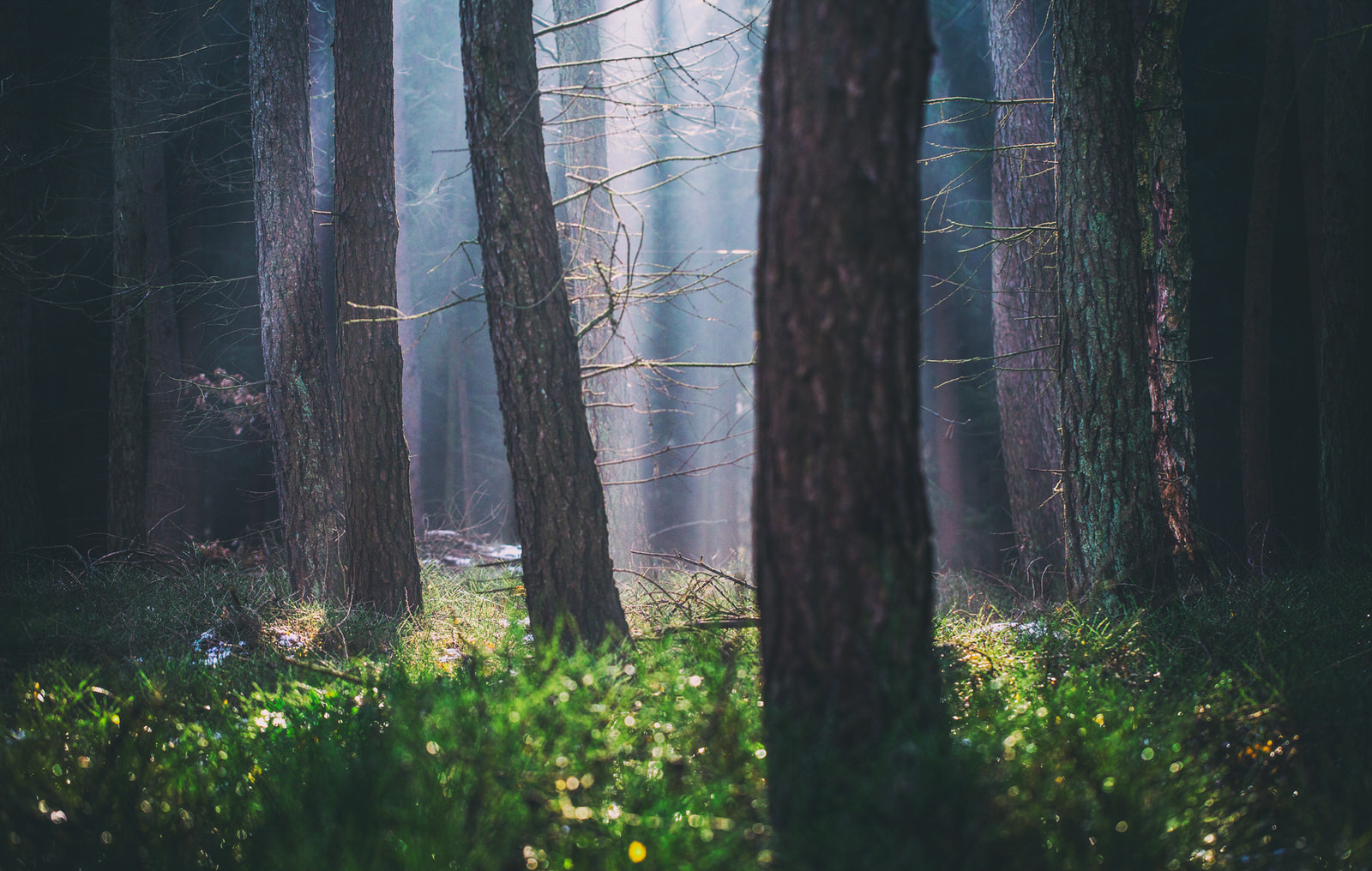 magic_morning_wald.jpg