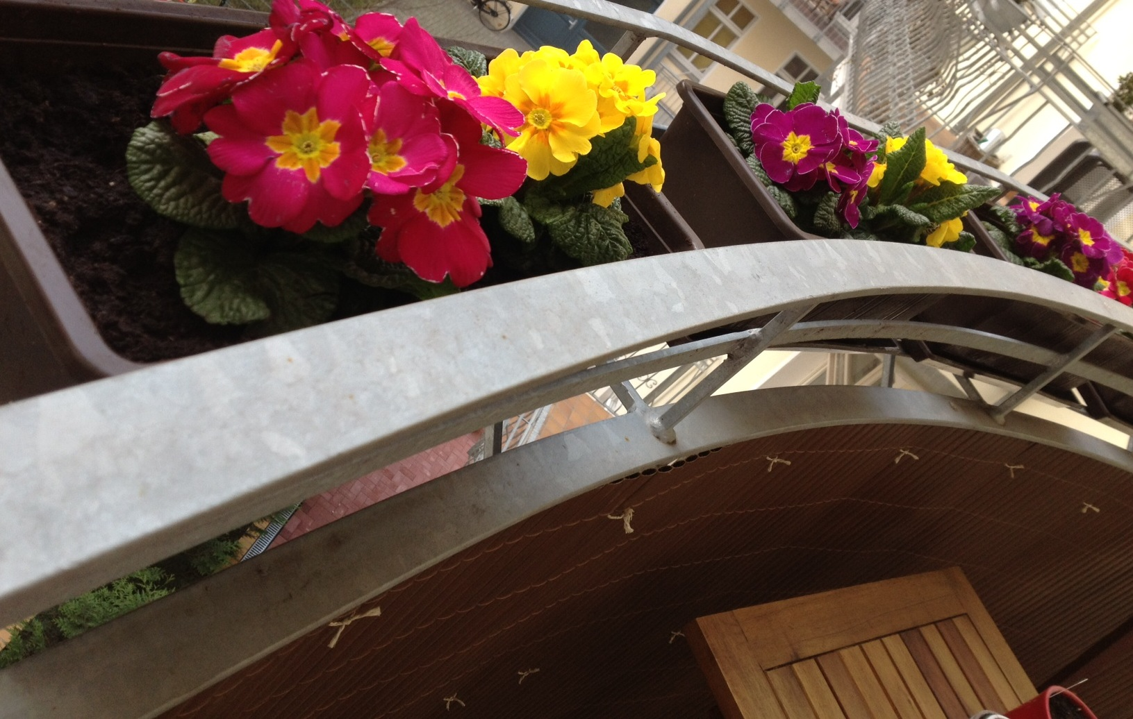 Balcony Flowers for Spring - - Savannah Page