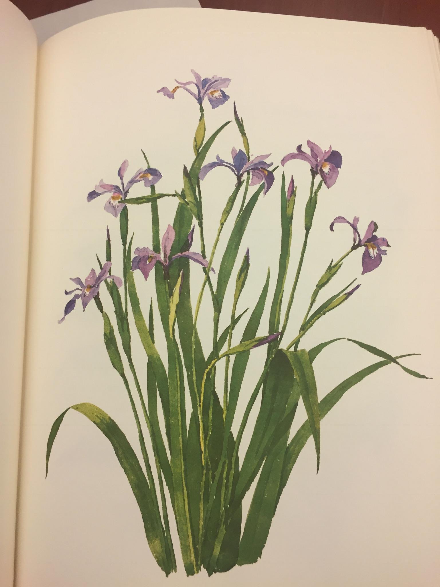 T. Merrill Prentice. Weeds & Wildflowers of Eastern North America, 1973. Minneapolis Athenaeum