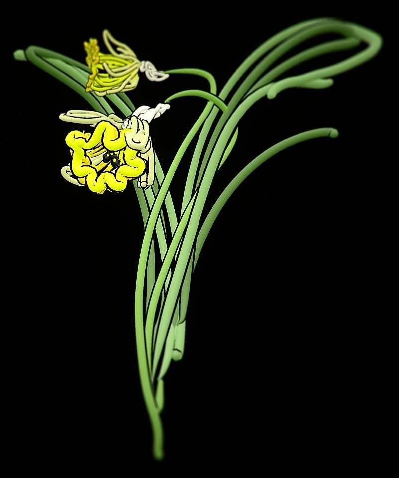 Daffodil. Narcissus Pseudo narcissus. After Lady Wilkinson's Weeds & Wildflowers, 1885.