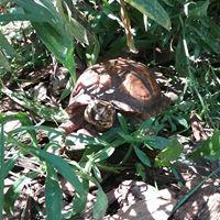 Turtle Smash.jpg