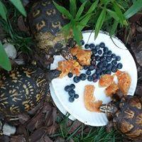 turtles box.jpg