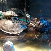 turtles water.jpg