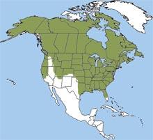 redfoxmap1 www.nhptv.org.jpg