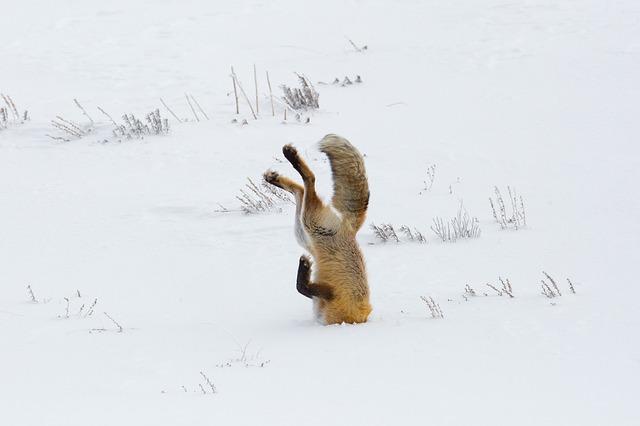 fox-3848307_640.jpg