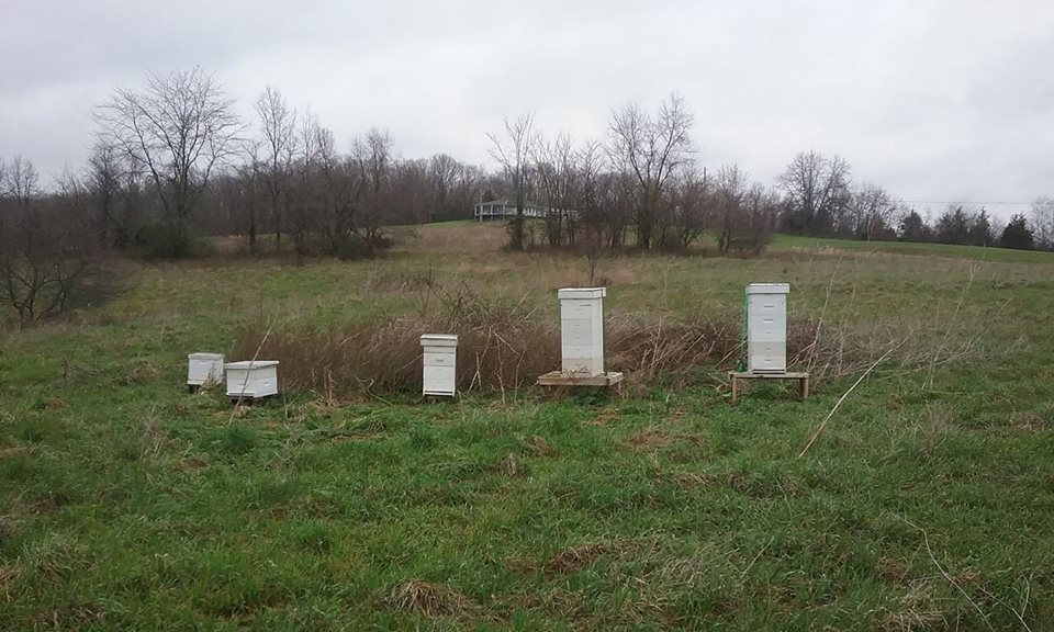 The bee hives at Fox Run Environmental Education Center