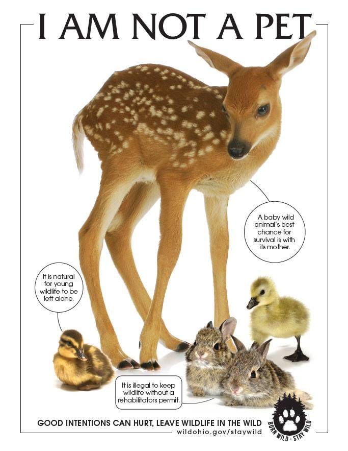 wildlife rehab.jpg
