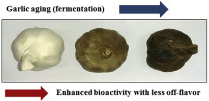 Credit:  Black garlic: A critical review of its production, bioactivity, and application
