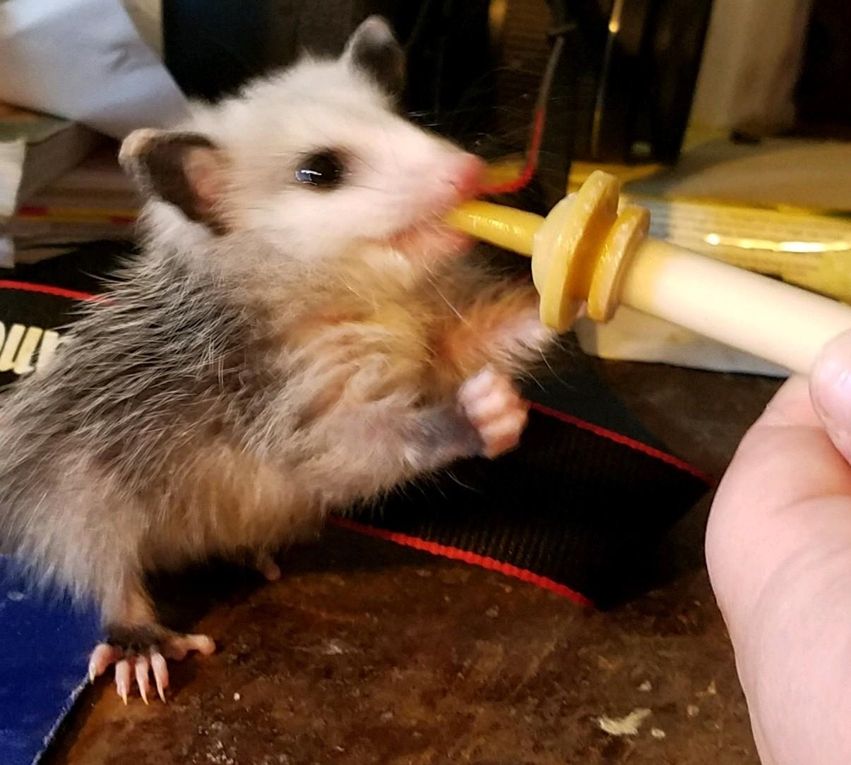 Wildlife rehabilitation at Fox Run