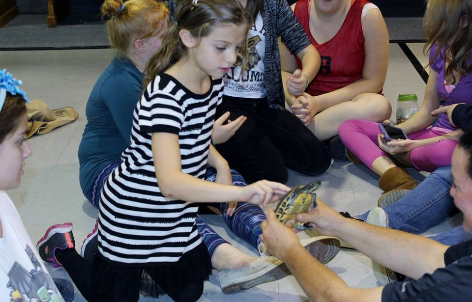 Fox Run EEC  Education programs  teach about turtles and other wildlife