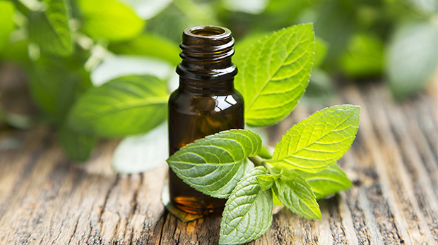 Peppermint Essential Oil -