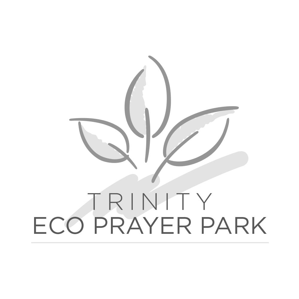 logo-trinity.png