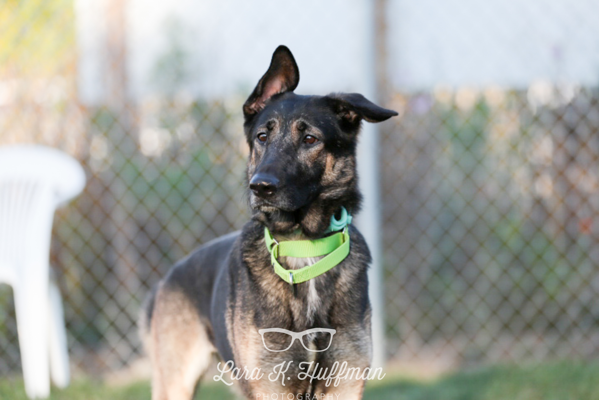 Rudette is a shy GSD, but once she warmed up to you, then you are golden.