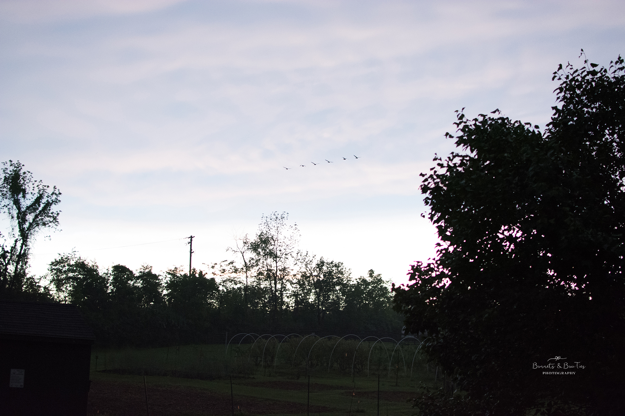photo of geese flying.jpg