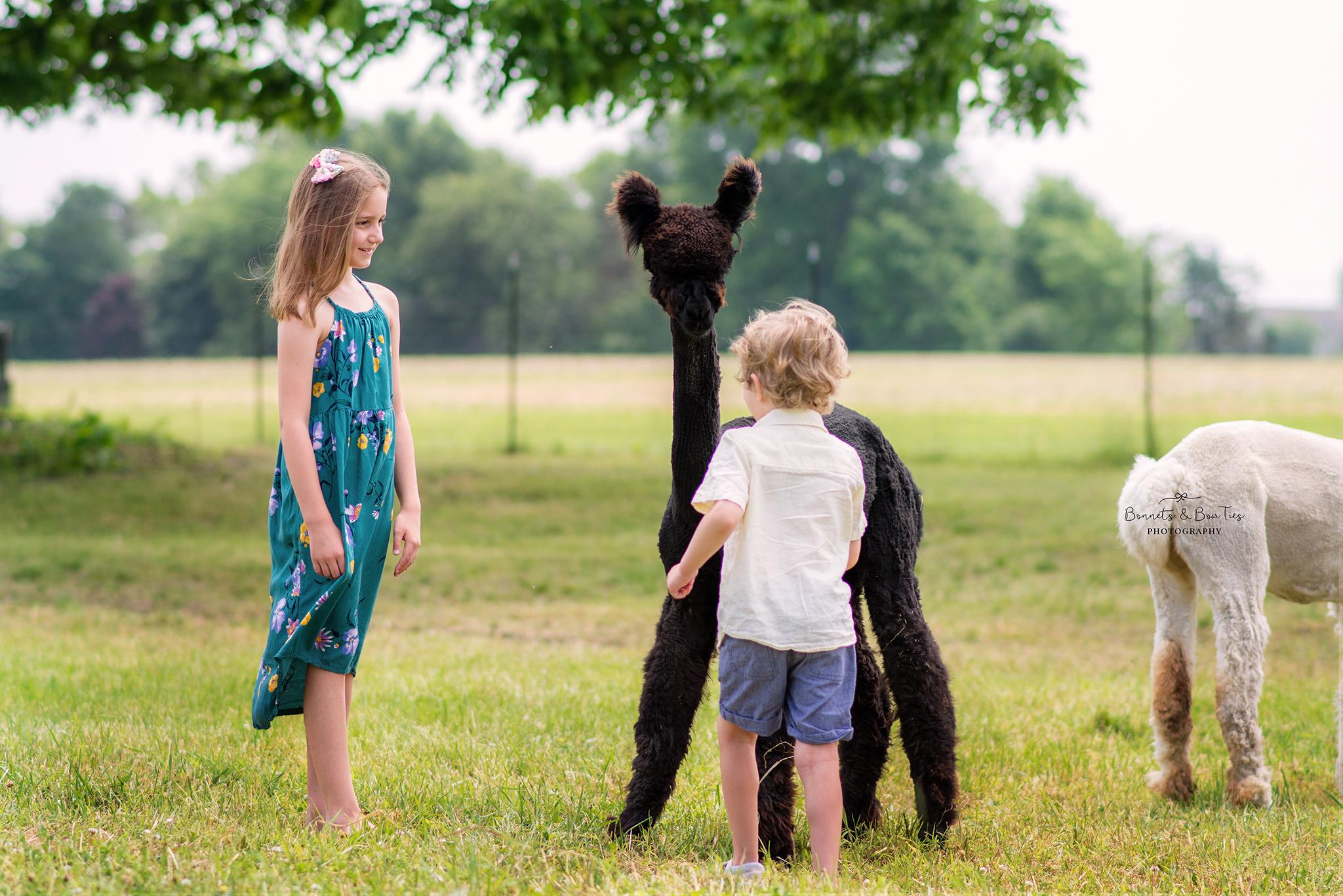 alpaca farm photos in mount wolf pa.jpg
