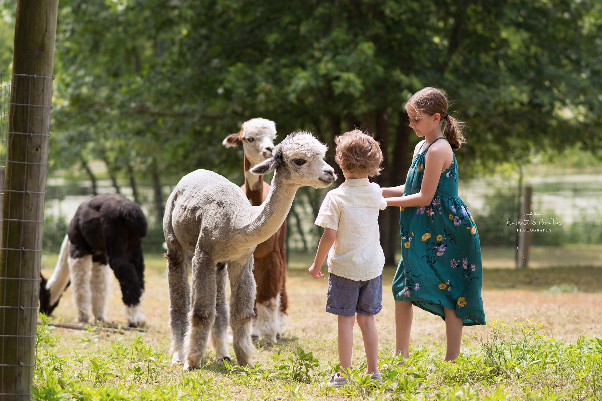 alpaca farm in mount wolf pa.jpg