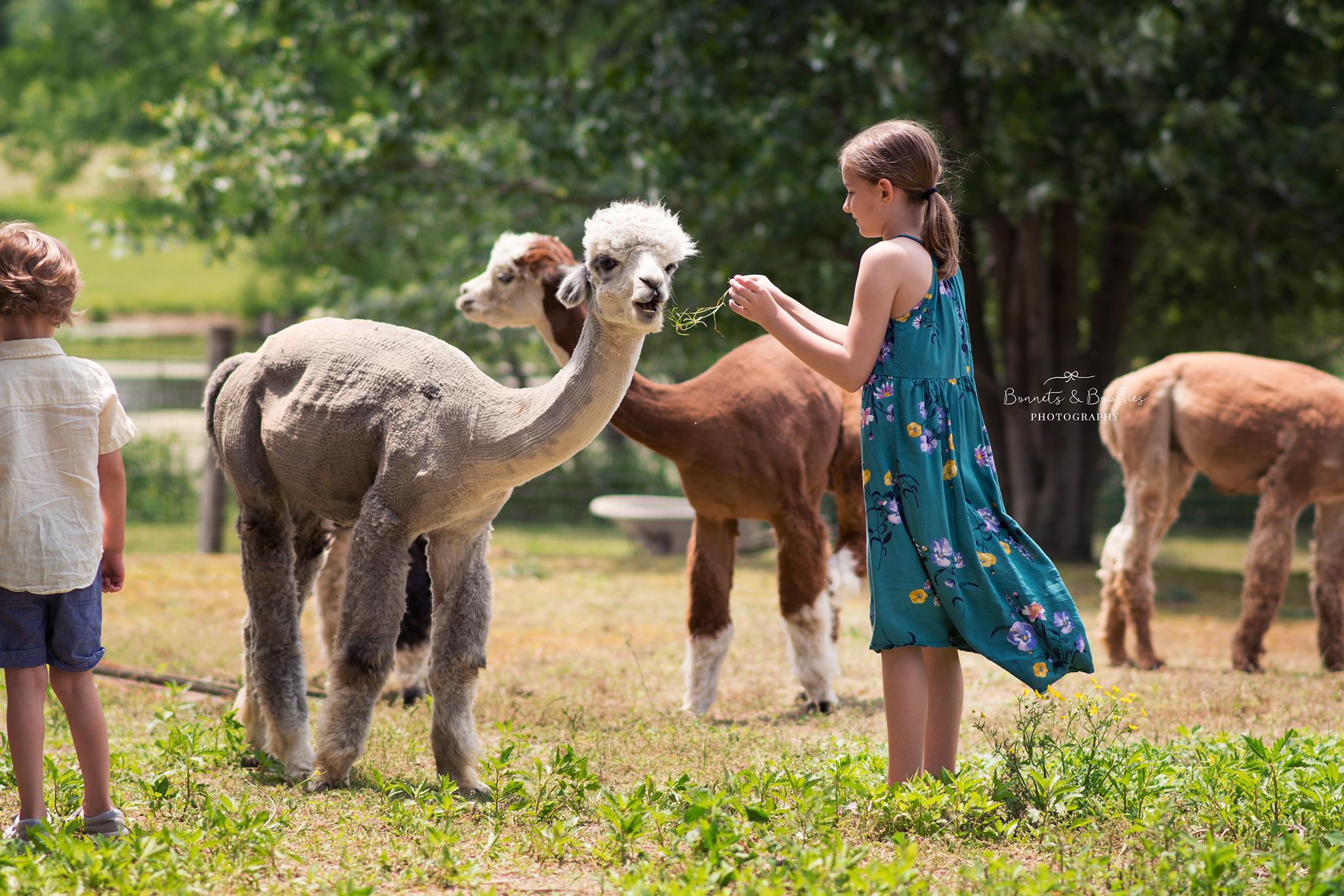 photos of an alpaca farm.jpg