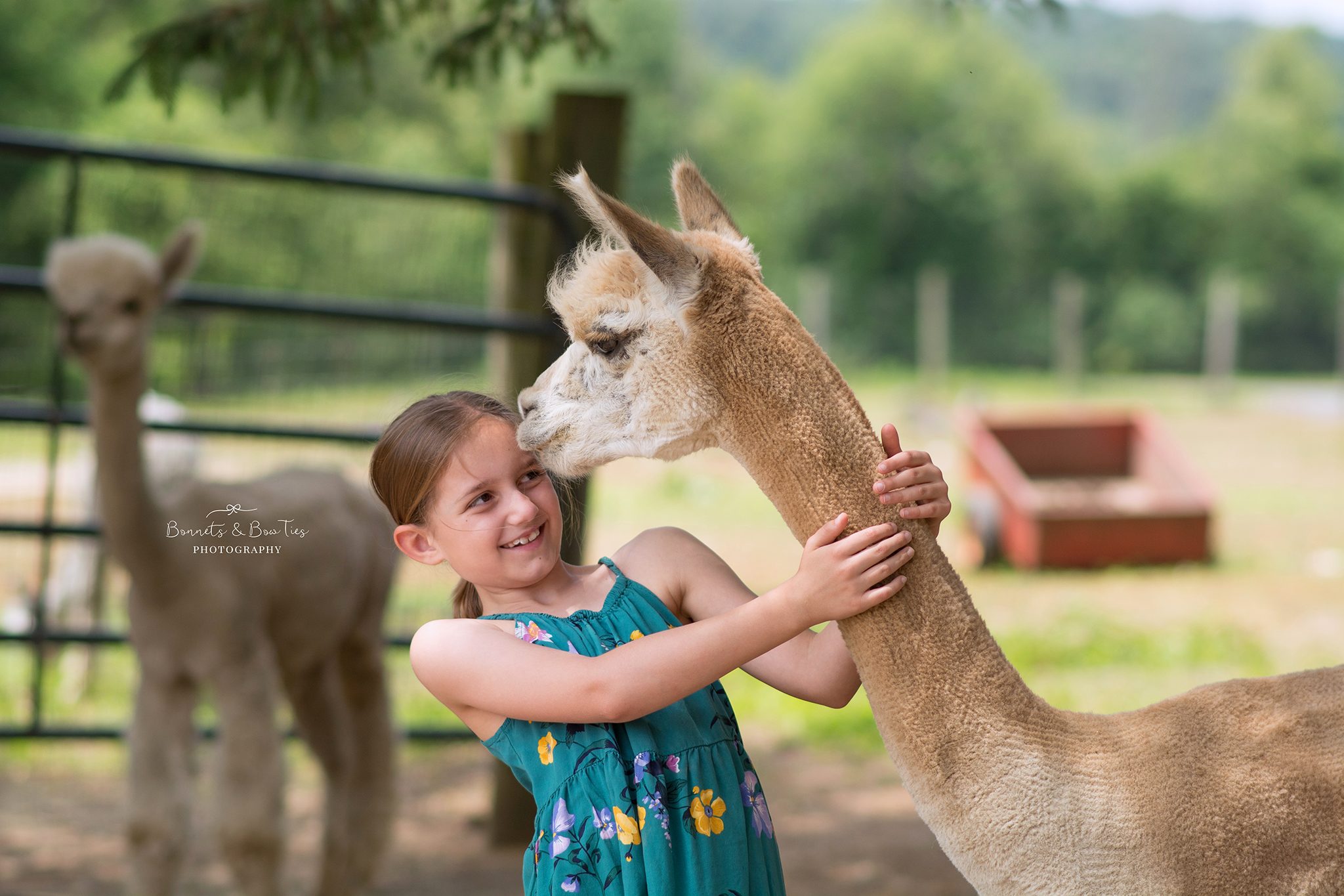 girl wearing blue hugging white alpaca.jpg