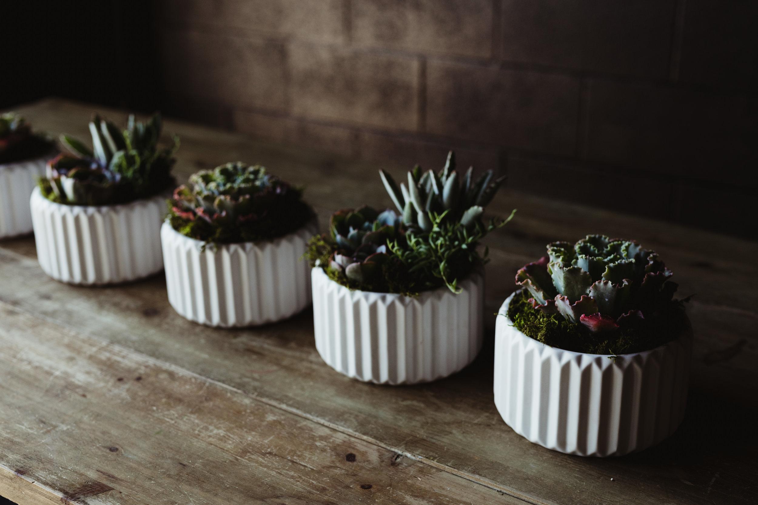 facebook-plants-1.jpg