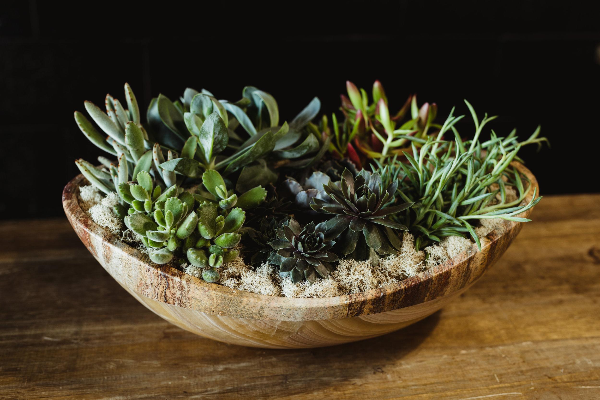 succulent arrangements-valentines-warehouse-1.jpg