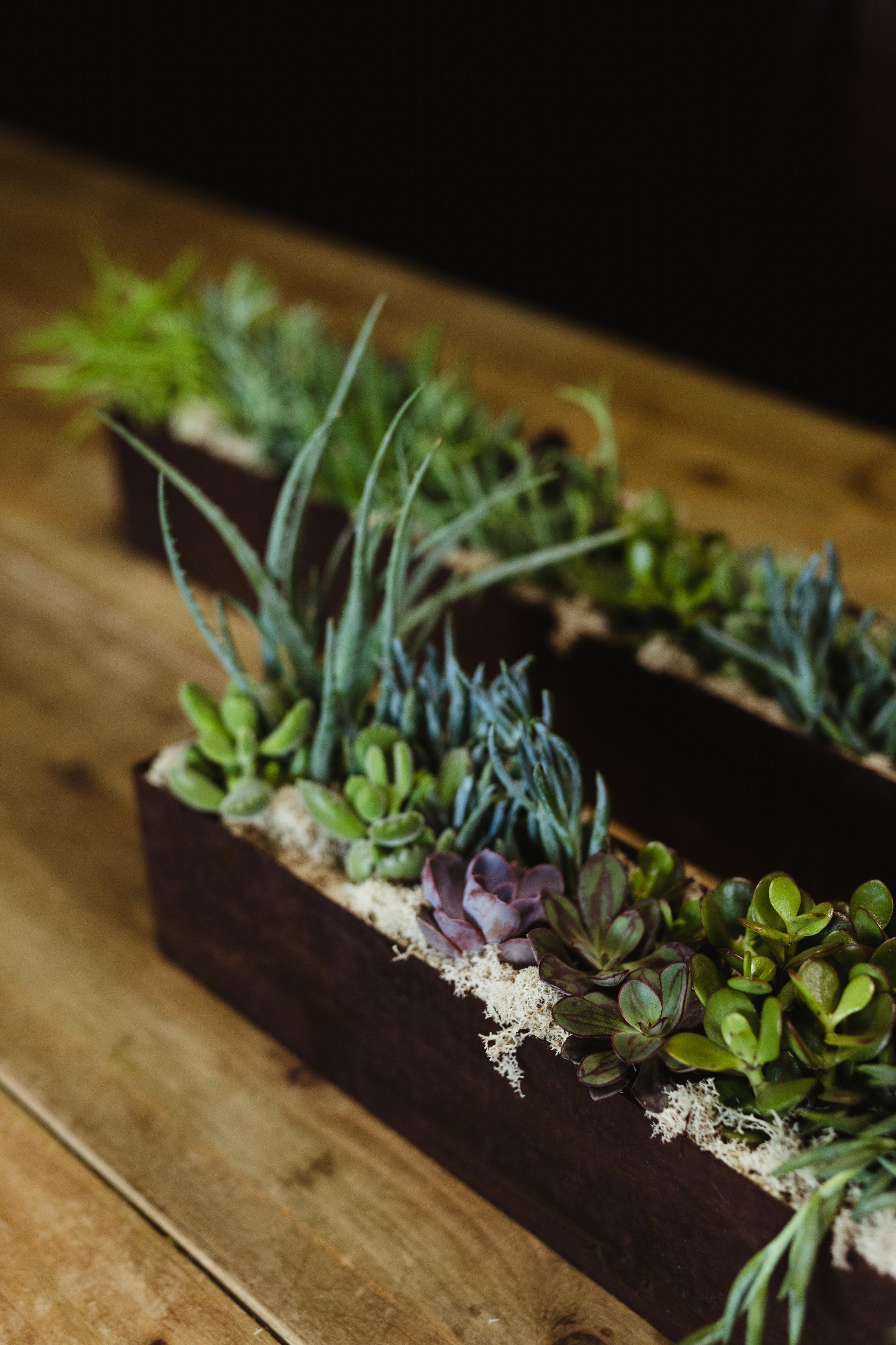 succulent arrangements-valentines-warehouse-48.jpg