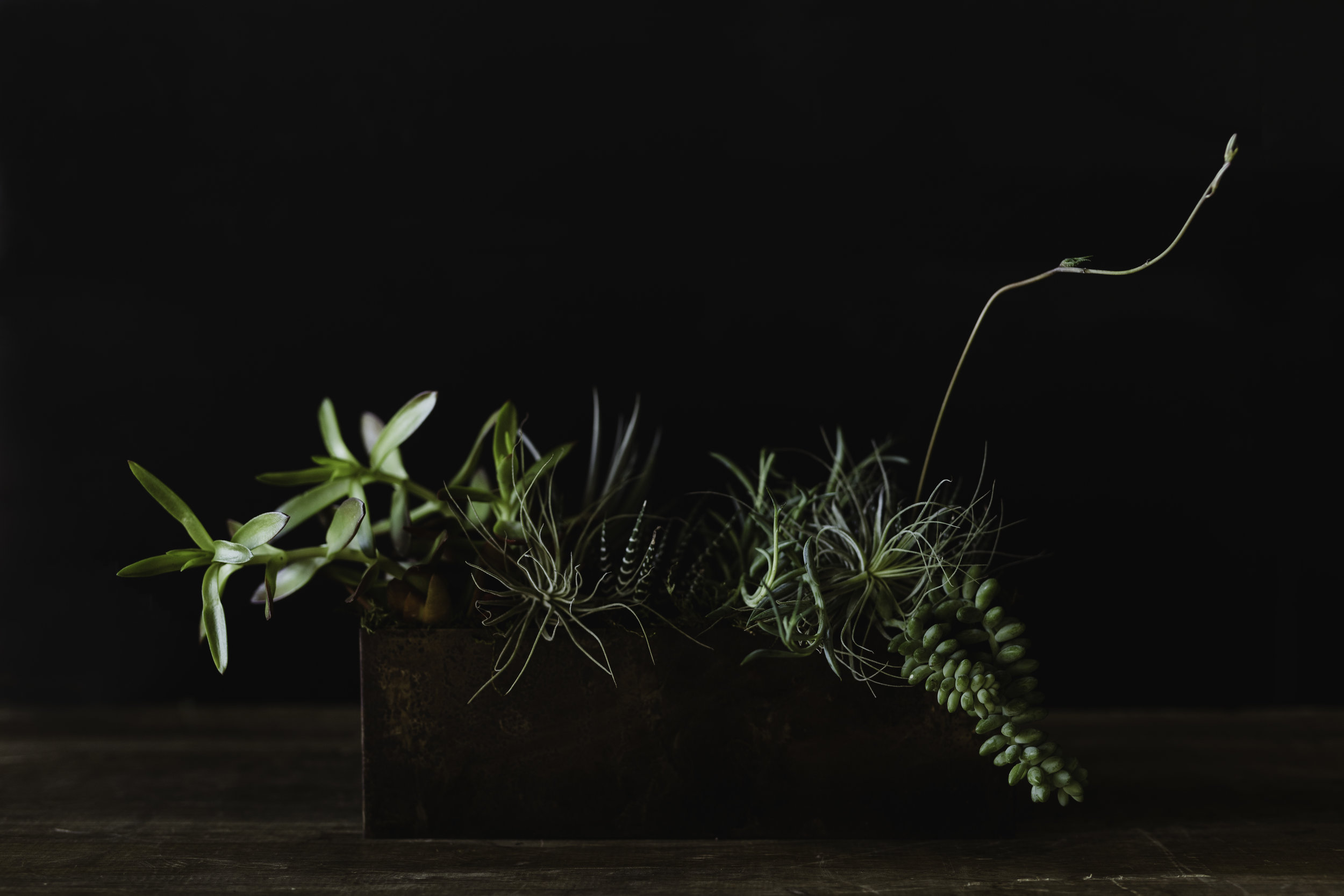 succulentarrangement_warehouse-amoncarter.jpg