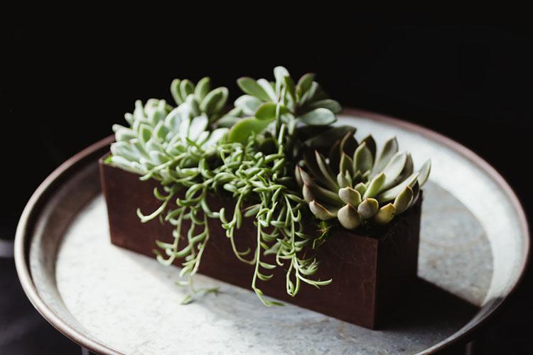 thegreenhouse817-succulentarrangement-web-5.jpg