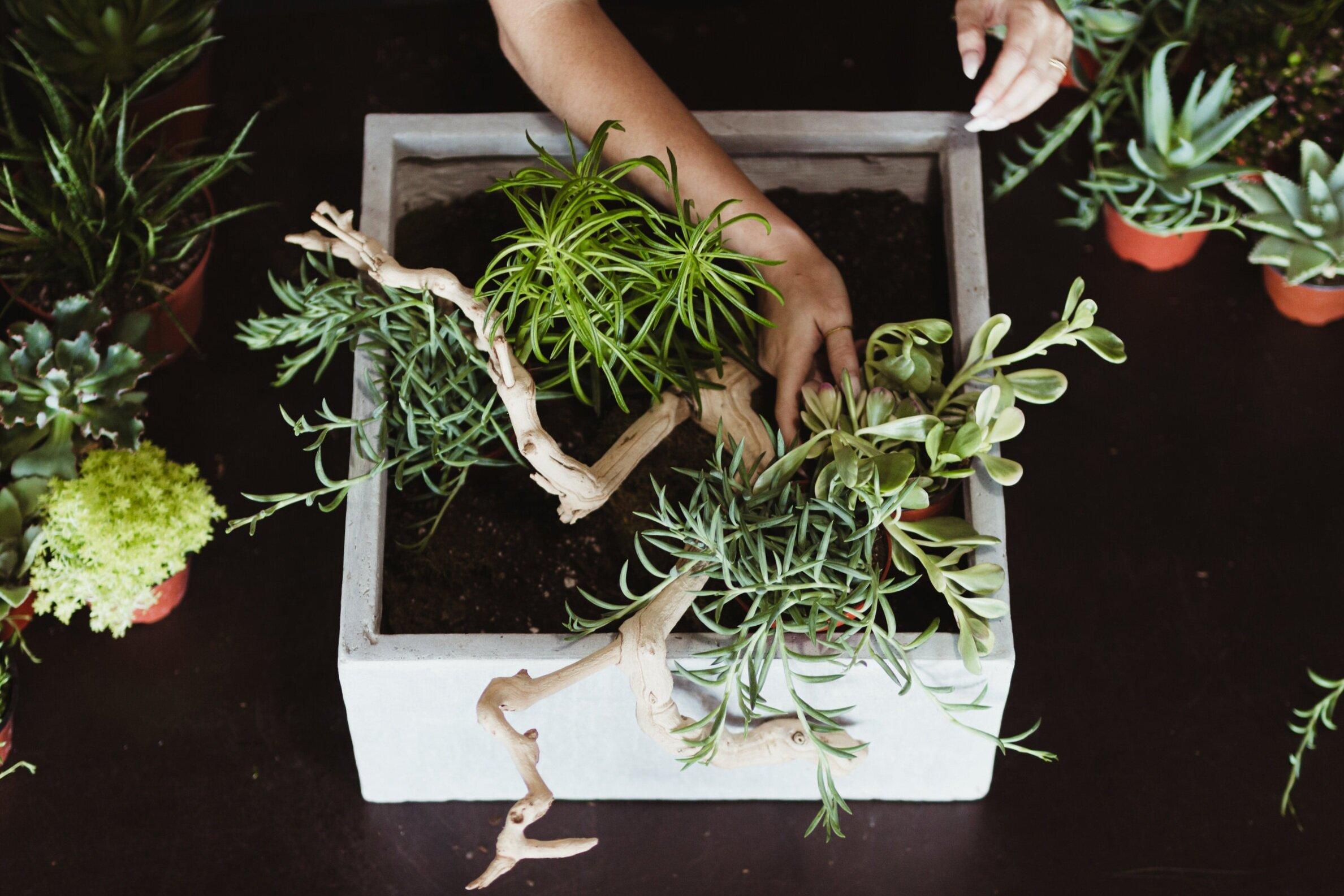 bts_succulentarrangement_planting17.jpg