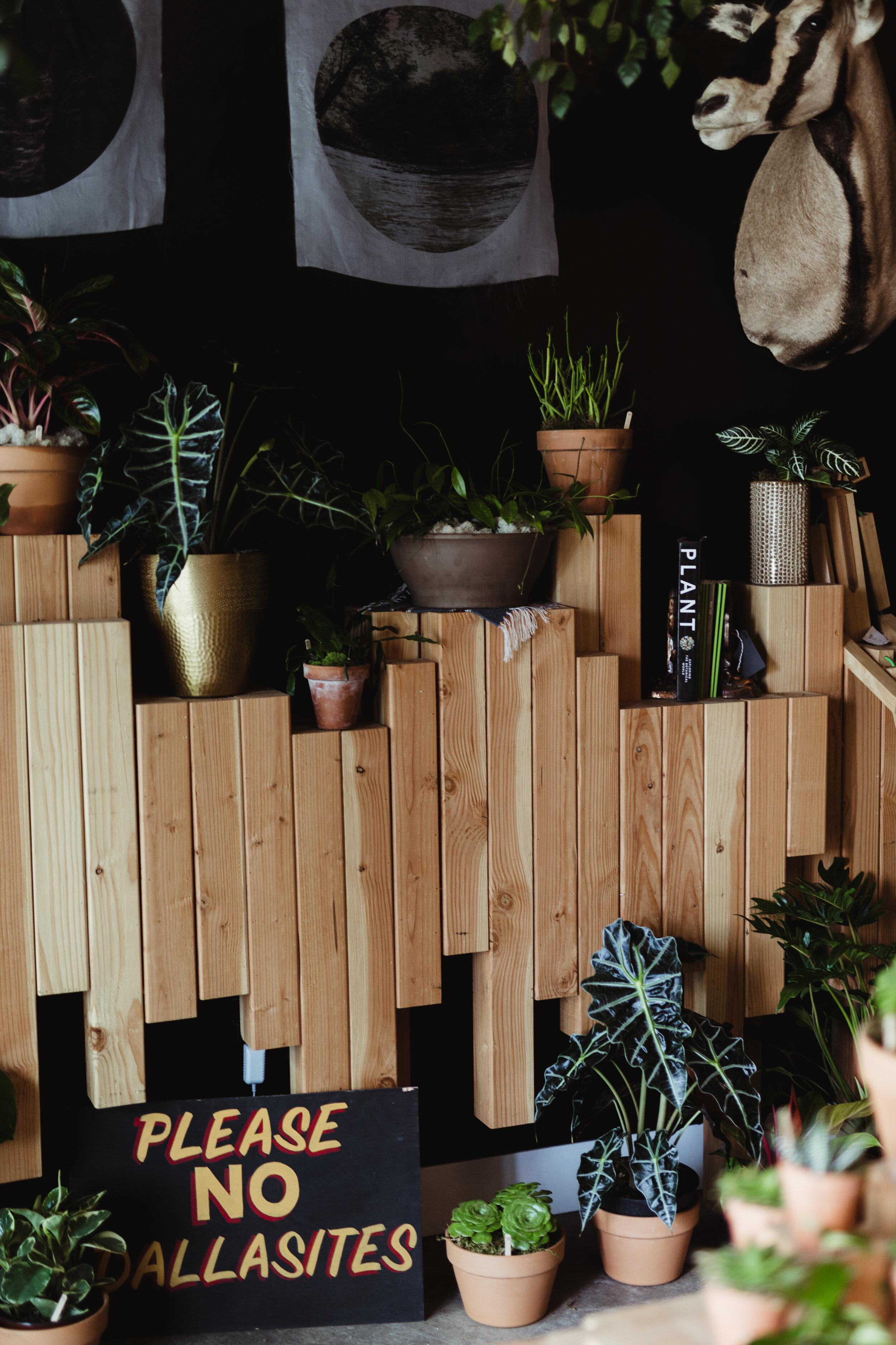the greenhouse 817-retail-newplants-44.jpg