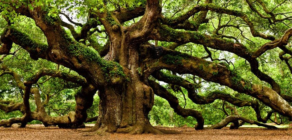 irish-tree-society-feature.jpg
