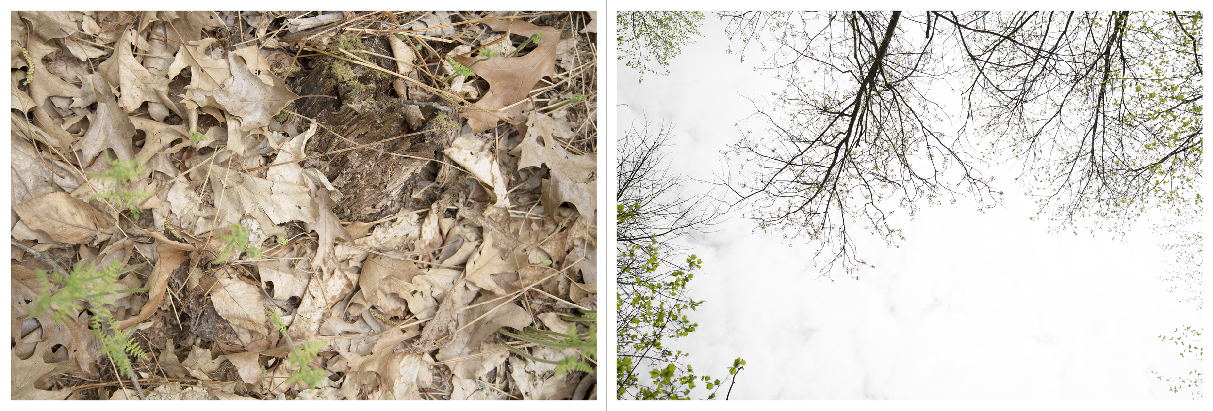 """And so on and so forth in much the same vein: Logging Road, Inkjet Photograph, 24"""" X 72,"""" 2015."""