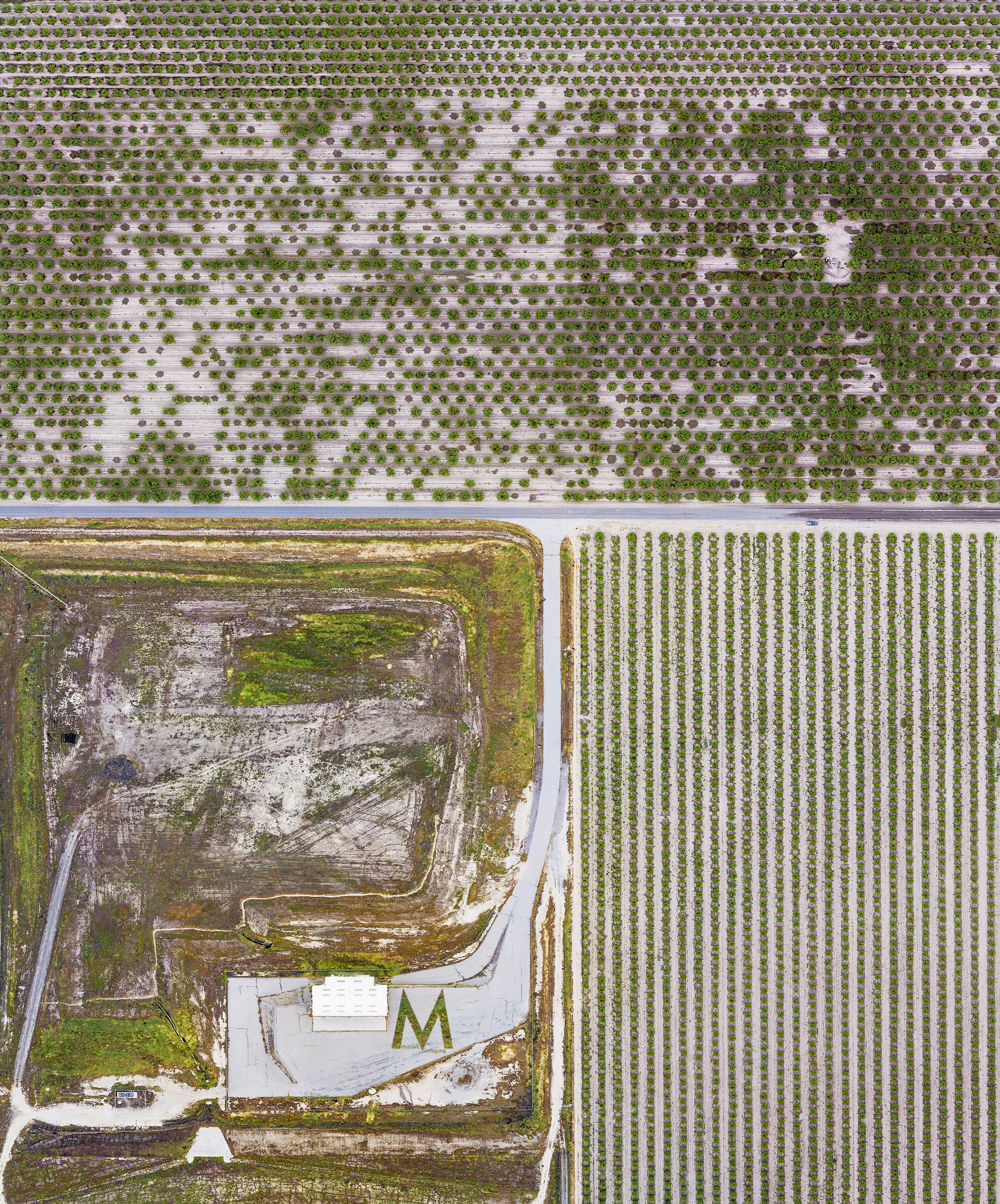 Composite photograph (about 280 pictures) of almond tree farm.
