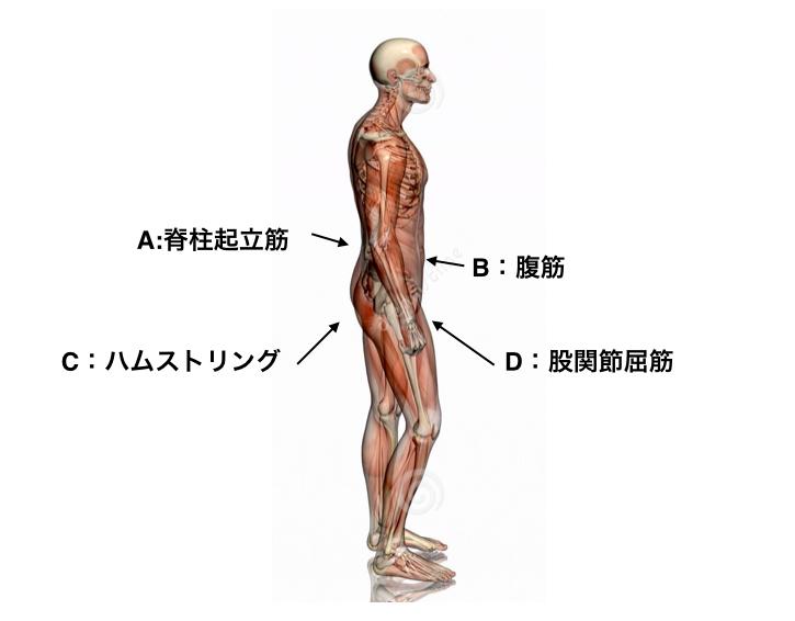 腰痛に悩んでいる人へ。普段の姿勢で分かるタイプ別腰回りのトレーニングのしかた!1