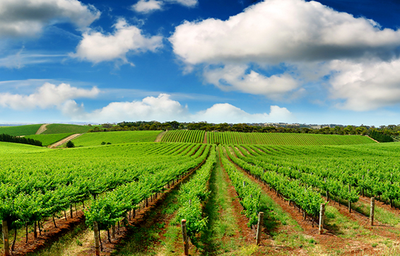 Best Hotels Adelaide Teaser Image Oaks Hotels Website.jpg