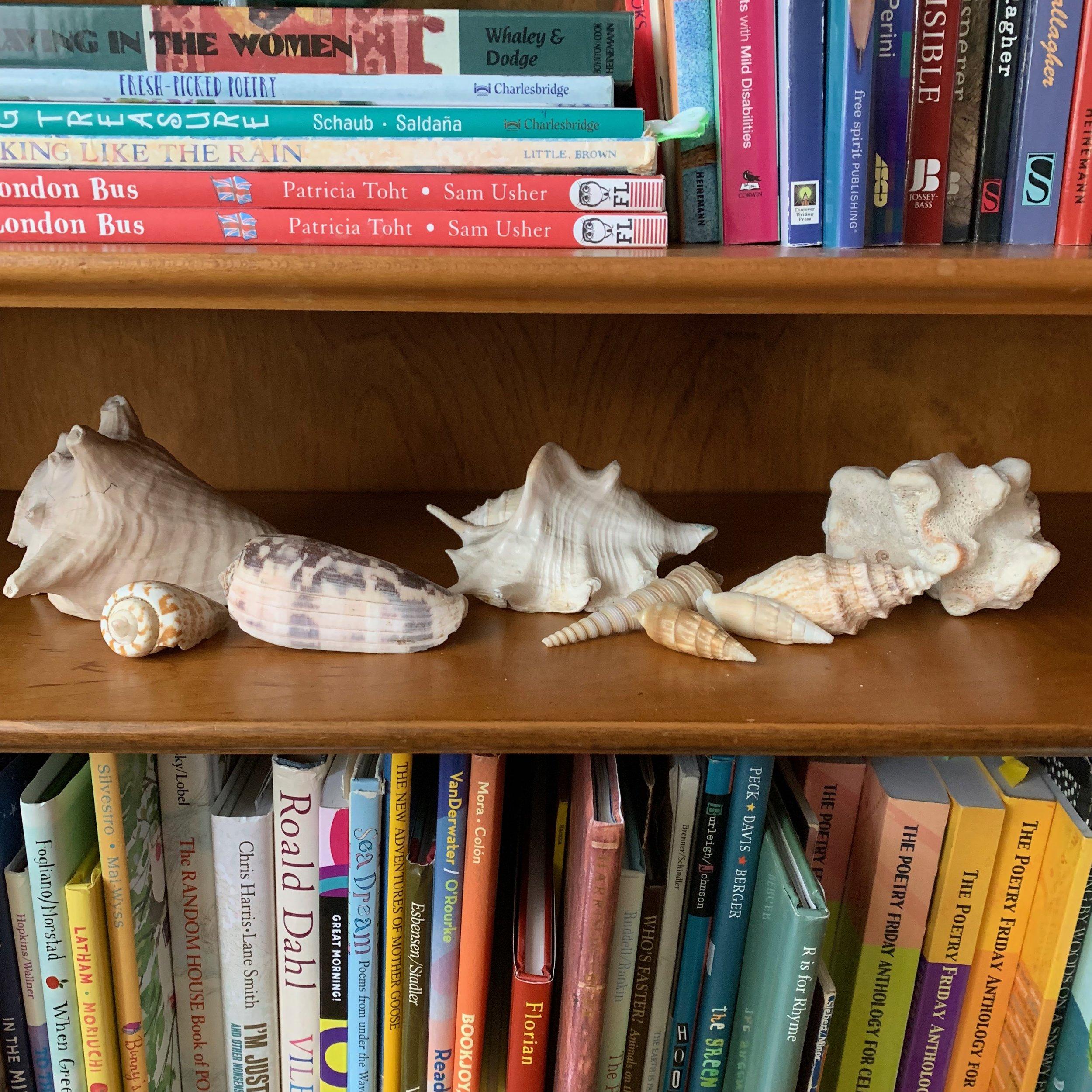 My grandma's seashells.