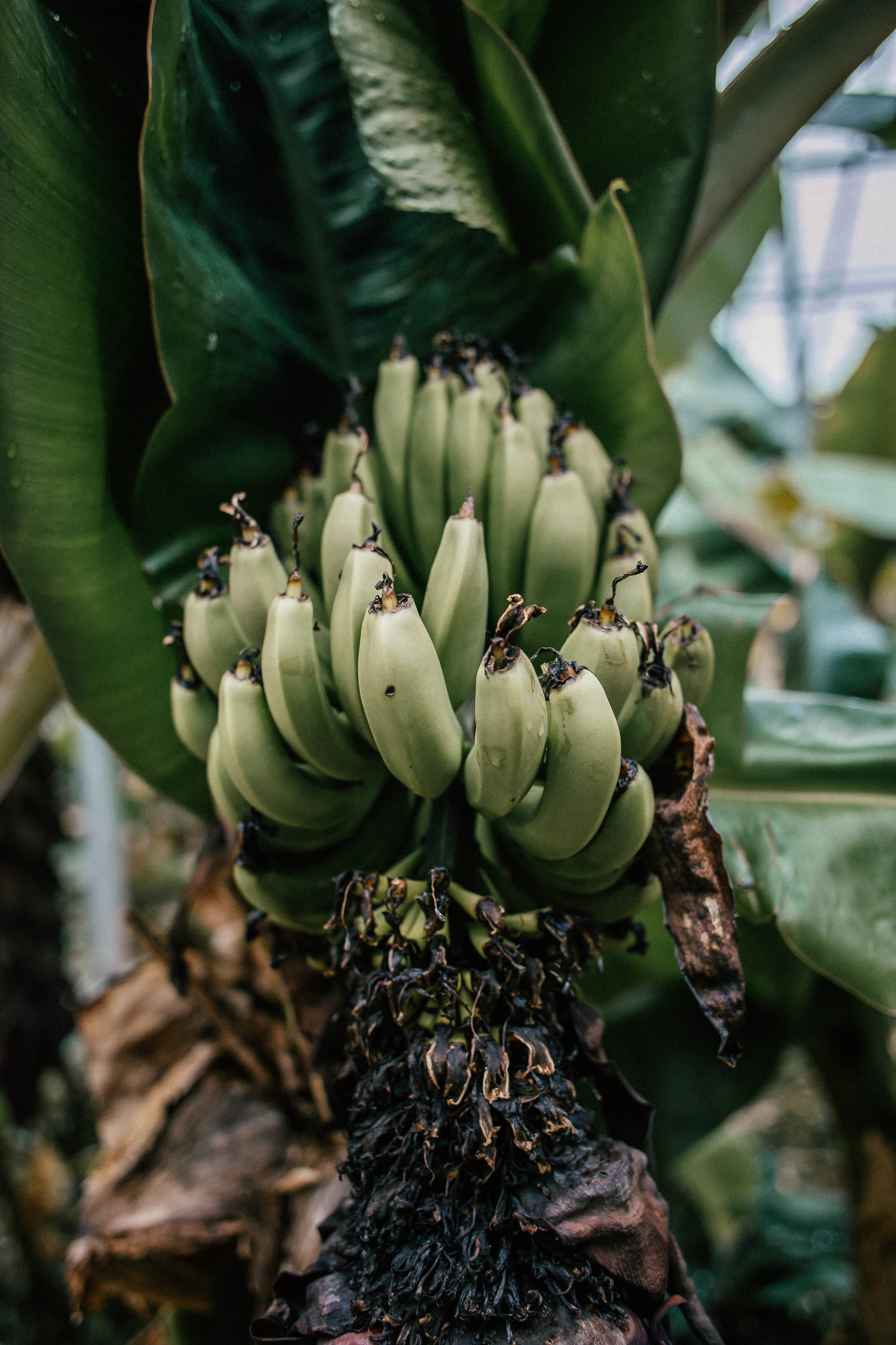 Photo by The Curated Feast of a bunch of bananas in  Hveragerði