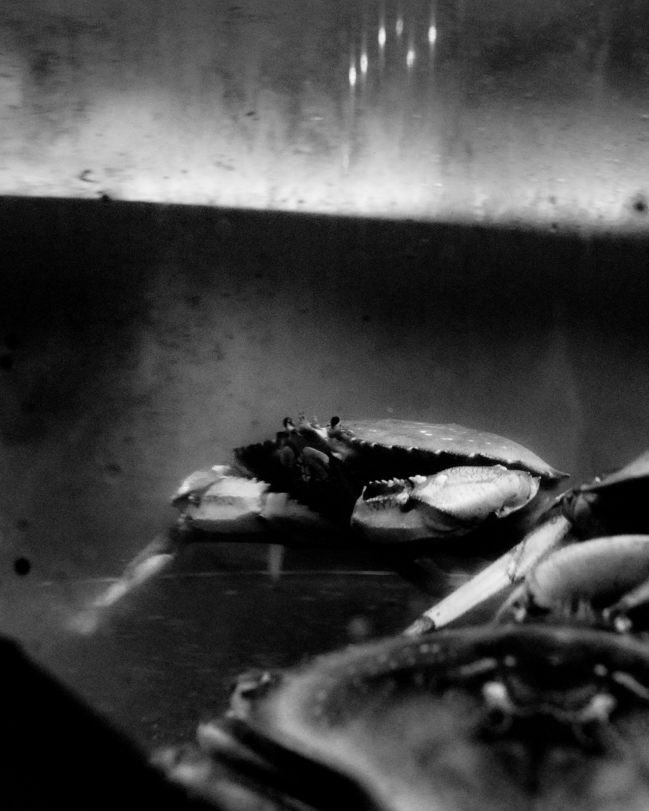KentColony_Crabs.jpg