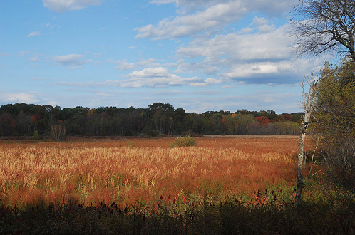 WSL is fortunate to be located adjacent to Arlington's Great Meadows, 183 acres of conservation land that protect wildlife and provide local flood control.