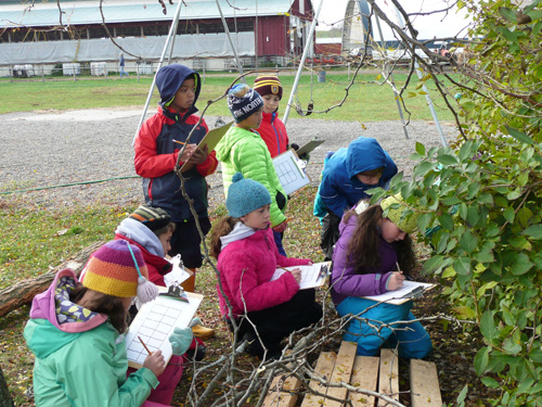 Recording first-hand observations is the cornerstone of many Waldorf science lessons.