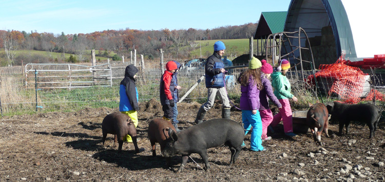 Next time you're on a working farm, put on your mud boots, catch a sow or a piglet, and see if you can do pig math!