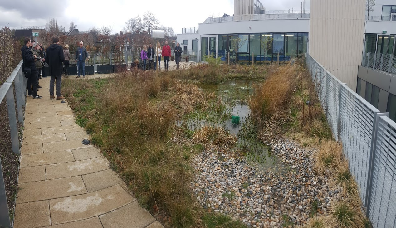 Pond on the roof is not very common but makes really good biodiversity