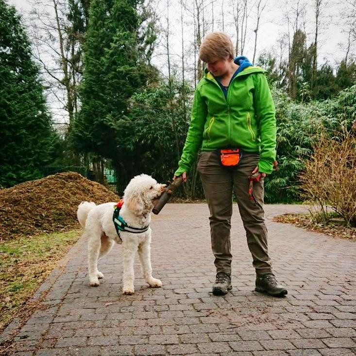 Luca, Goldendoodle teef, therapiehond bij DePaw