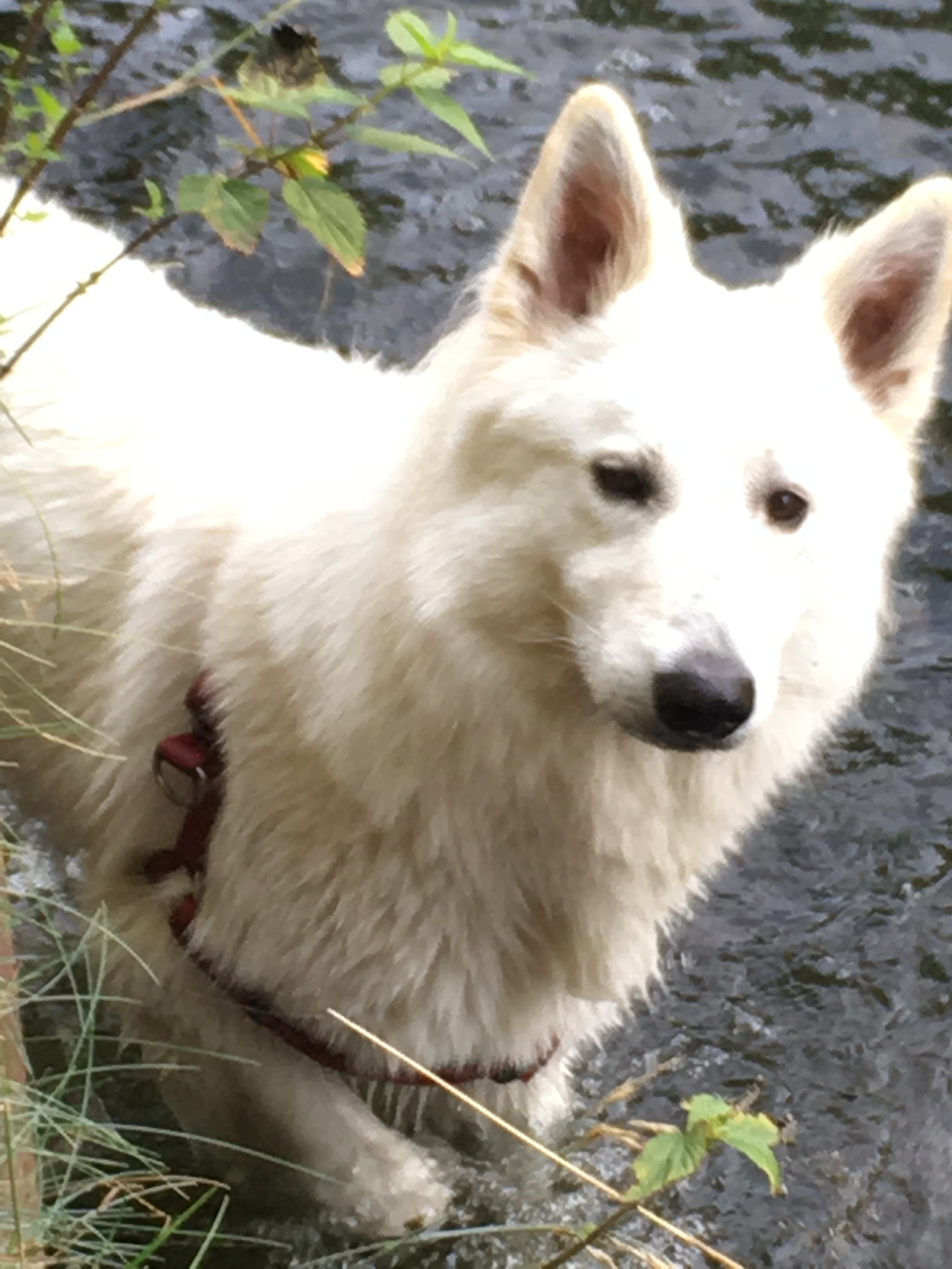 Paxx, gecertificeerde therapiehond