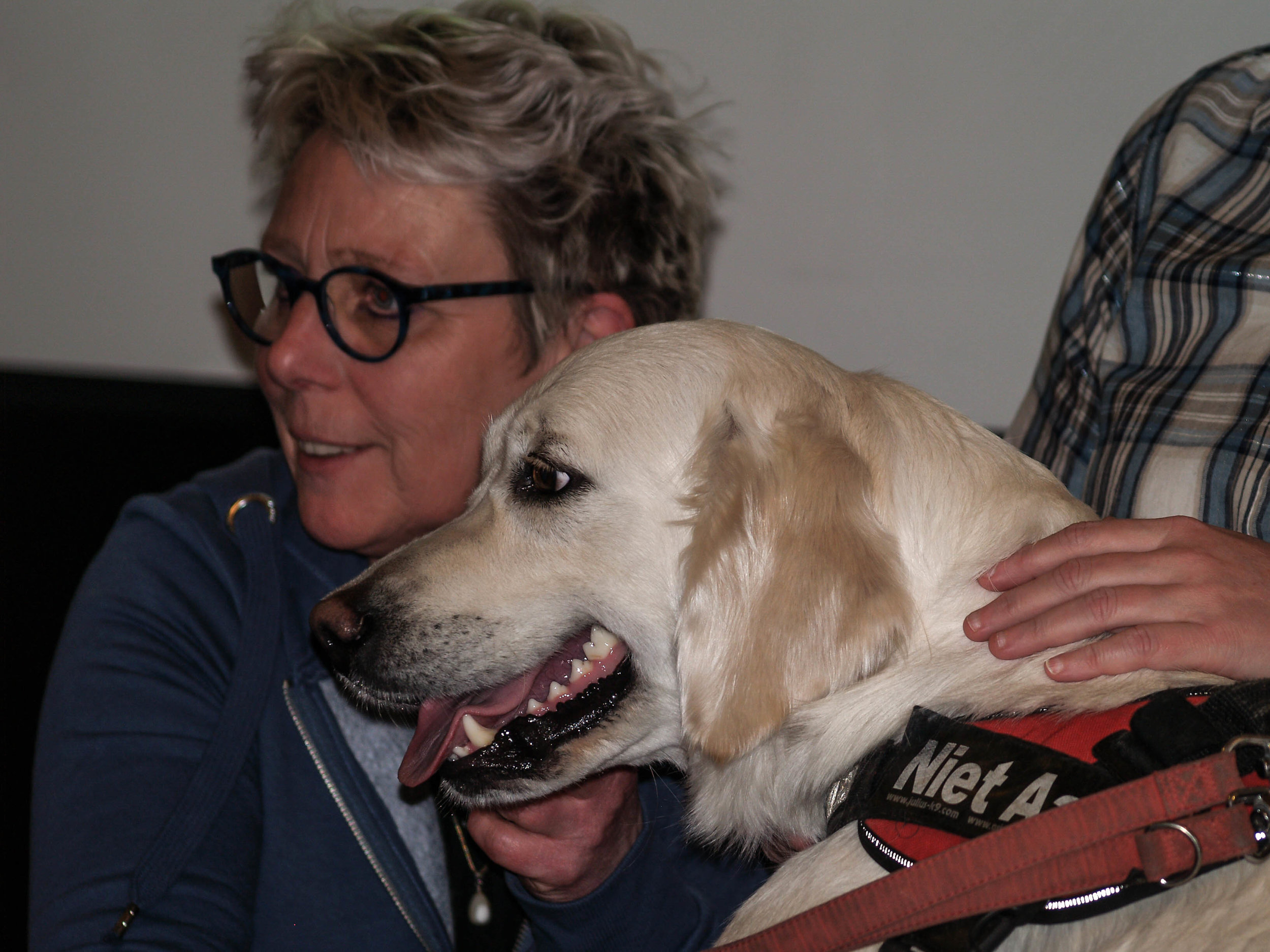 Wentel, Golden Retriever teef, therapiehond bij SAM-en, Lucian Voet