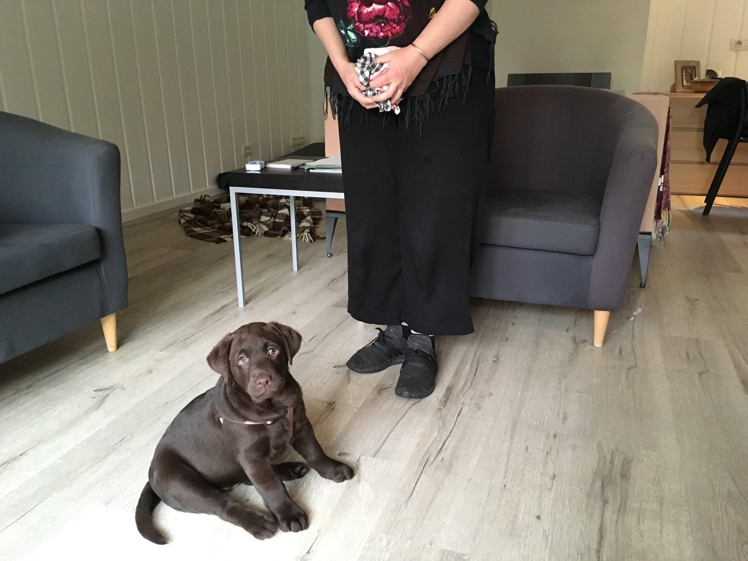 Vina, Labrador teef, therapiehond bij Sofie De Burchgrave