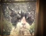 cat.oct9.jpg